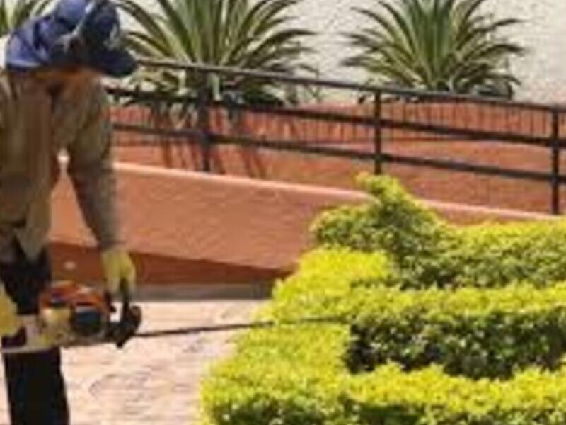 Mantenimiento de Jardines y áreas verdes
